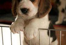 adorable,cute,beautiful / by janita munbodh