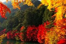 Autumn Beauty / Here at EarthTurns.com, we are all about natural and nature! This board is dedicated to the natural beauty of the Fall! / by EarthTurns