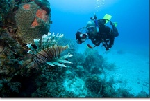 What You Miss When You Don't Dive! / Event Divers provides empowering scuba diving trips to Mexico and the Caribbean for offsite corporate meetings, sales conferences, or destination weddings!
