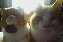 My love for orange kitties*⁀ღ / The best cat I ever had was a long haired orange cat named Tootie(male).He was part main coon and  was very,very special.  had him since he was born..lived to be 21, went to the Rainbow bridge in Feb.2011..miss him still every day..you were my sunshine sweet boy..dedicated in his memory ❤ / by ☪ᏕᏂÅz *⁀ღ