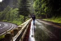 Washingtonions LOVE RAIN
