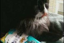 Cat and DogTreats / by ☪ᏕᏂÅz *⁀ღ