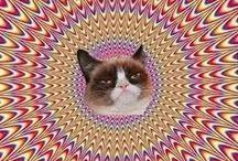 ♡Grumpy Cat / by ☪ᏕᏂÅz *⁀ღ