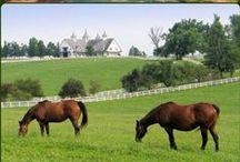 My Old Kentucky Home / by Rachel H