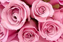 Pink / Minden ami pink