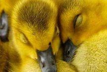 Yellow / Minden ami sárga.