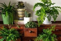 """Plants and Planters / Plants - the backbone of life on Earth; an essential resource for everyday life. """"Plants...they supply almost everything."""""""