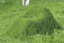 Vitaal buitengebied in Breda / Duurzame en innovatieve landbouw blijft de komende jaren van economisch belang voor het Bredase buitengebied. Landbouw, gericht op de bewoners van Breda en de regio. En landbouw die goed combineert met het landschap, met recreatie. Daarom splitst Breda haar buitengebied op in zones: intensieve akkerbouw, glastuinbouw, stadslandbouw, verbrede landbouw en agrarisch natuurbeheer. Zie je het al voor je? / by Breda2030