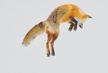 foxes & mermaids
