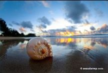 Seashore and Gifts from the Sea / by Lee Warren