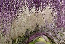 Flowers / I fiori e le piante più belle
