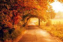 ♡ Autumn  / Herfst | Autumn | Fall | Season | Cold | Koud | Seizoen | Rain | Regen | Wind | Autumn breeze | Leaves | Bladeren | Acorn | Eikel | Kastanje | Chestnut | Piny cones | Dennenappel | Pumpkin | Pompoen | Kalebas | Mushroom | Paddenstoel | DIY | Gezelilg | Cozy | Candless | Kaarsen