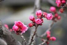 Lente # Pasen # Voorjaar! / Lente Pasen en voorjaar