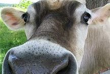 For the animals. / A look into farm sanctuaries.