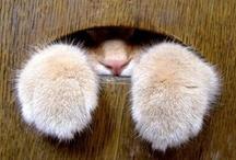 Furry / by Sidsel Eide