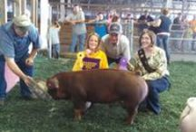 County Fair Fun! / Check out the Fun We have at all the local Fairs!
