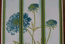 SU Field Flowers