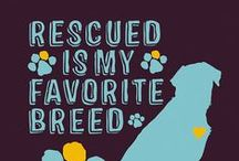 Rescue Dogs/Cats