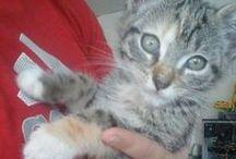 Katzenliebe ❤