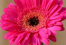 Flower shop / Arrangements of flowers