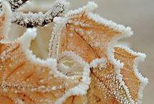 *Winter is coming / El invierno Duward