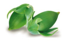 Olio Jojoba Linea Erboristica Omia Laboratoires / l'Olio di Jojoba impiegato in questa linea proviene da agricoltura biologica certificata e viene estratto con metodi meccanici senza l' utilizzo di solventi sintetici.