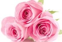 Rosa Damascena Bio Fiori Linea Erboristica