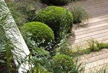 jardin (d'intérieur)