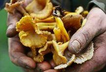 champignons!!!