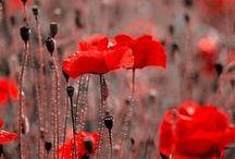 . Florystyka - gatunki, porady / ulubione / do kupienia / do zapamietania