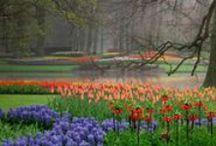 . Ogrody, parki, skwery / kwiaciarnie, zieleńce, grządki..
