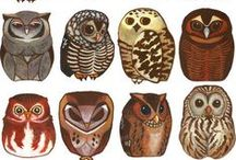 illustrations animales