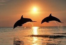 Dolphins / by Kimberley =^..^=