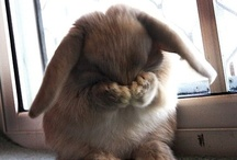 Bunnies / by Kimberley =^..^=
