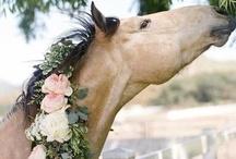 Horses / by Kimberley =^..^=