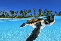 Turtles / by Kimberley =^..^=
