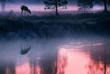 Nature's Beauty / by Kimberley =^..^=