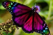 Butterflies / by Kimberley =^..^=