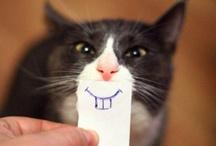 Teeth! Good and Bad. :)