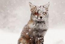 a n i m a l s / Animals, wild animals, pets, beautiful, nature