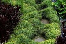 Residential Design / Residential Landscape Design