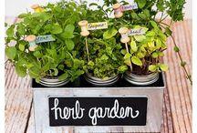 Garden / Ideas and inspiration for the garden