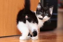 Gatitos Hermosos