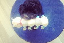 Bubbles / Bubbles, my 10 months old bichon havanese. She learned me to commit and to share love just like kids do.