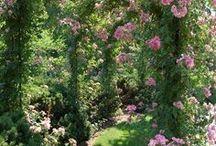 DREAM GARDENS / Natura,giardino