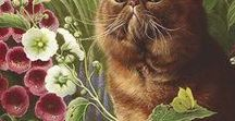 CATS  IN THE GARDEN / immagini di felini  abbinati a fiori, piante