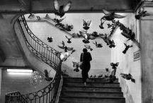 """foto / """"Il desiderio di scoprire, la voglia di emozionare, il gusto di catturare, tre concetti che riassumono l'arte della fotografia."""" Helmut Newton"""