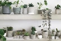 House... plants