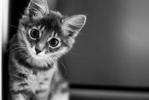 Adorable Cat`s...always