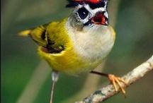 birds / by Jackie Almman